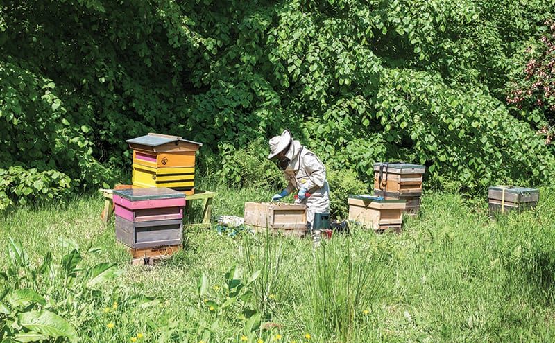 Helena working in her main apiary featuring four of her own hives