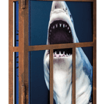 michael-muller-sharks-limited-edition