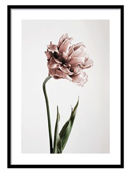 Pink Tulipe No1 Poster, from £6.95, Desenio