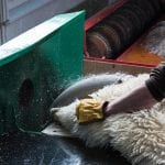 Pete-uses-a-buffing-wheel-made-of-Scottish-granite-to-give-the-leather-side-of-the-sheepskin-its-soft,-almost-sueded-finish