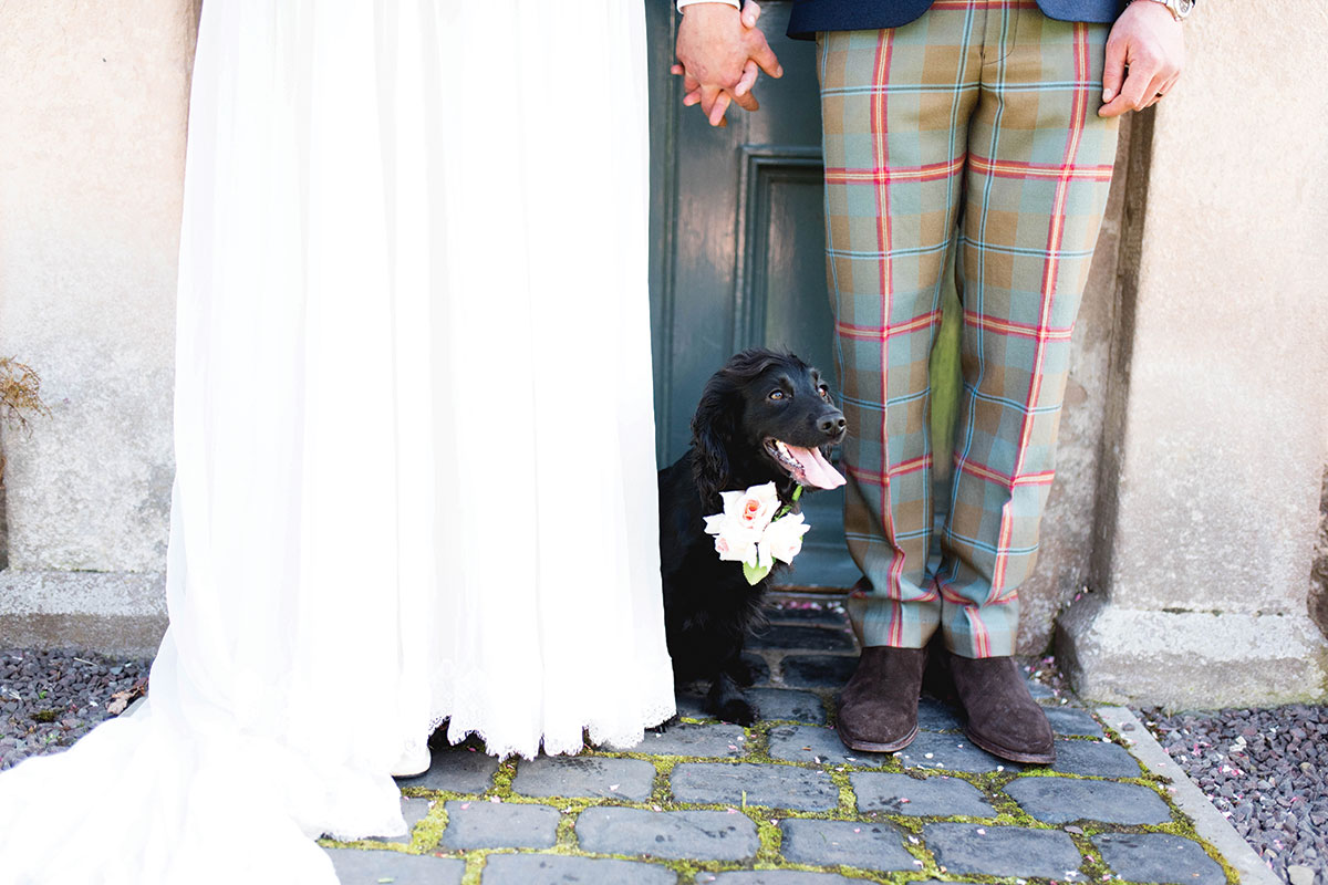 dog-posing-with-bride-and-groom