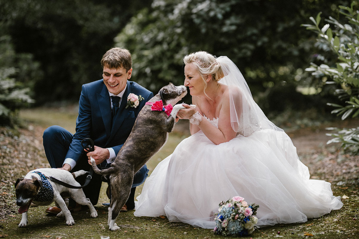 couple-holding-two-dogs-with-colourful-collars