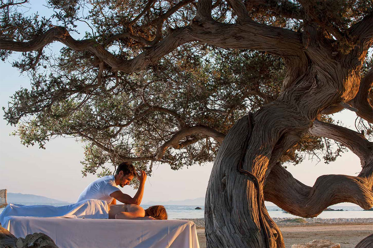 Finikas-Naxos-olive-tree-and-back-massage