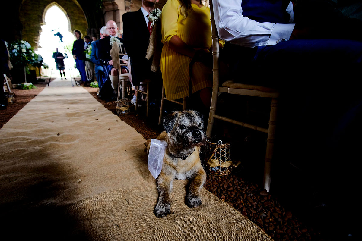 dog-being-ringbearer-at-wedding-ceremony