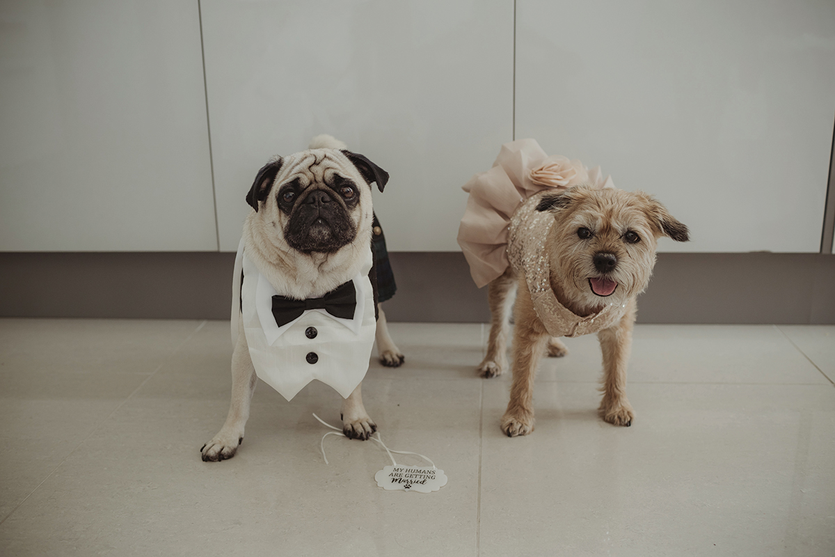 dogs-in-suit-and-dress