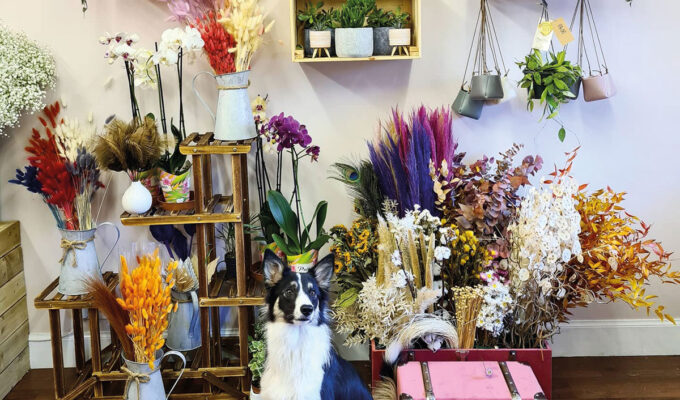 Dog in a flower shop