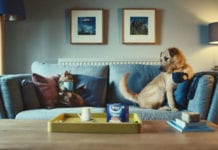 dog on sofa behind tetley