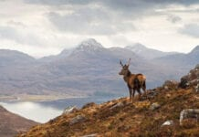 highland-scenery-with-stag