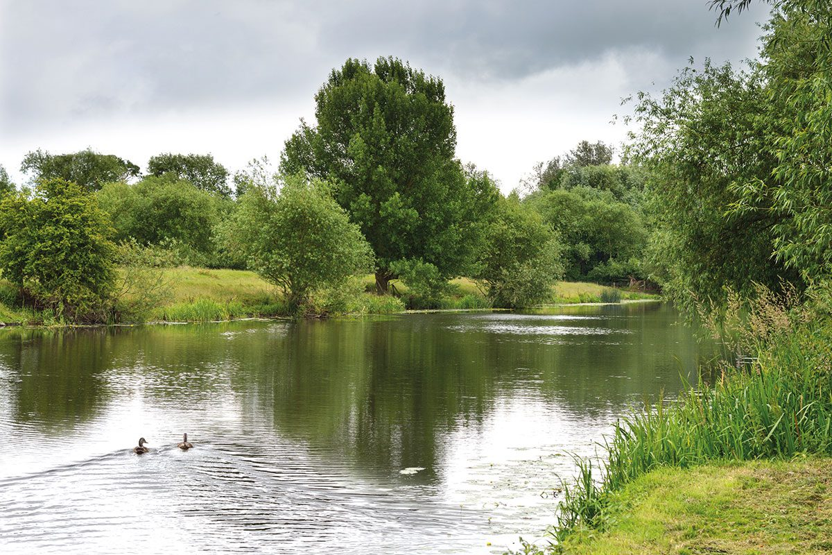 pond-with-ducks-swimming
