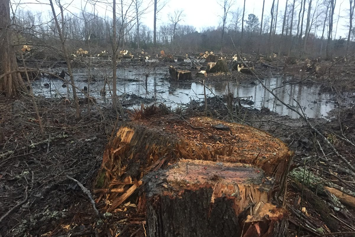 New Investigation Exposes Destruction Of Forests To Feed